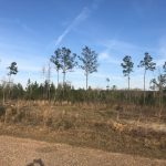 22± Acres in Lincoln County