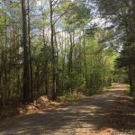 50± Acres in Lincoln/Lawrence County
