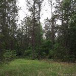 212± Acres in Lincoln County, MS