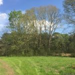 355± Acres in Lincoln/Lawrence County
