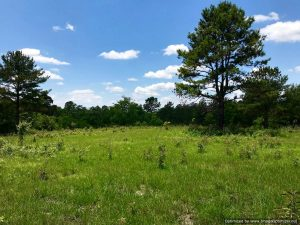 land-for-sale-in-perkinston-ms