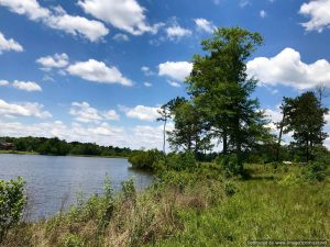 land-for-sale-in-stone-county-with-waterfront