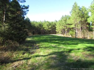 land-for-sale-in-madison-county-mississippi