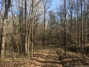 land-for-sale-in-adams-county-mississippi