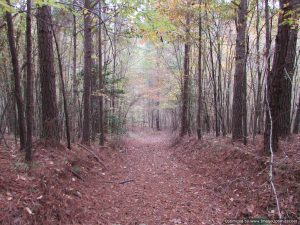 land-for-sale-in-winston-county-mississippi