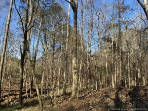 land-for-sale-in-franklin-county-mississippi