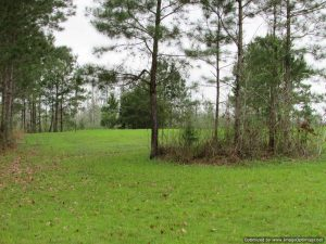 land-for-sale-in-leake-county-ms