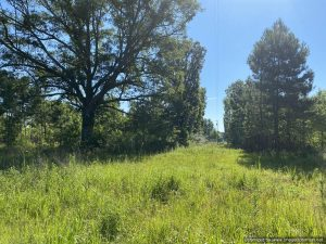 timberland-for-sale-in-bogue-chitto-ms