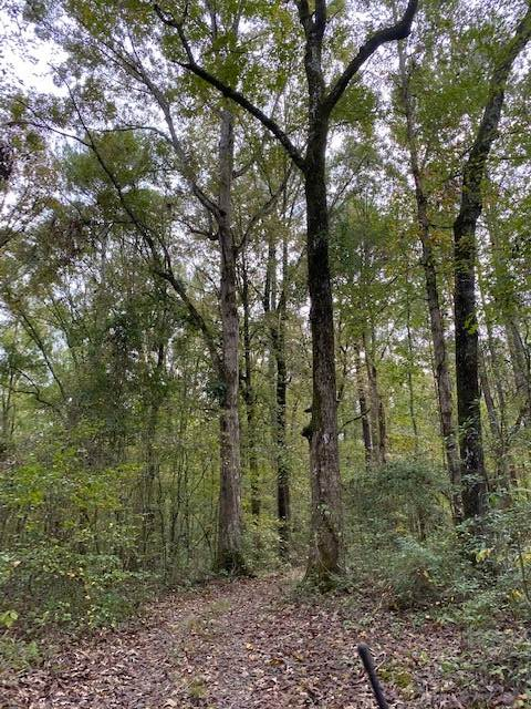 hunting-land-for-sale-in-leake-county-ms