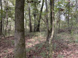 land-for-sale-in-Noxubee-County-MS