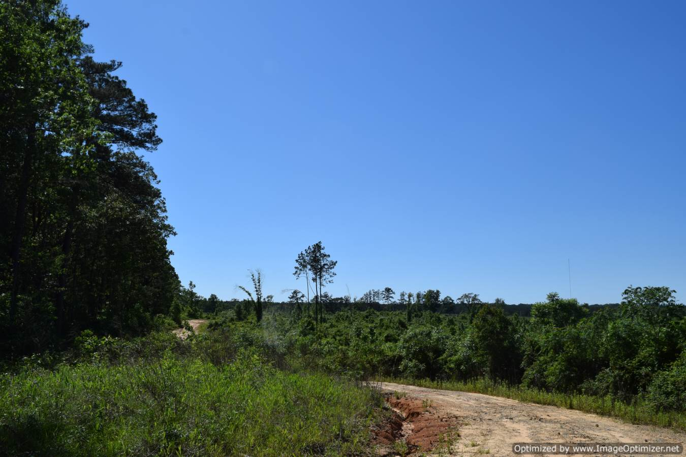 land-for-sale-scott-county-ms