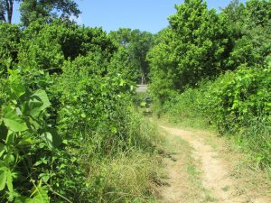 land-for-sale-madison-county-ms