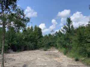 land-for-sale-in-scott-county-ms